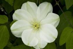 Guernsey Cream Featured Image