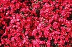 Aster Red Alert Featured Image